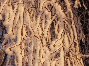 2 rimfrost