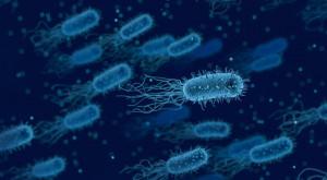 bacteria-3662695_1920