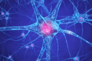 brain-cells-nootropics